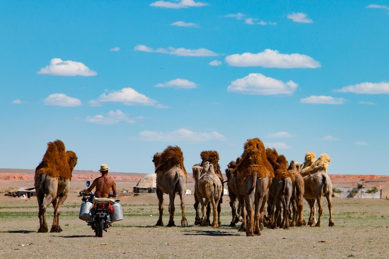 photo Gobi Desert. Herding camels. untitled-993_zpsckk8jaxm.jpg