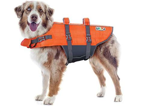 dog-hiking-gear